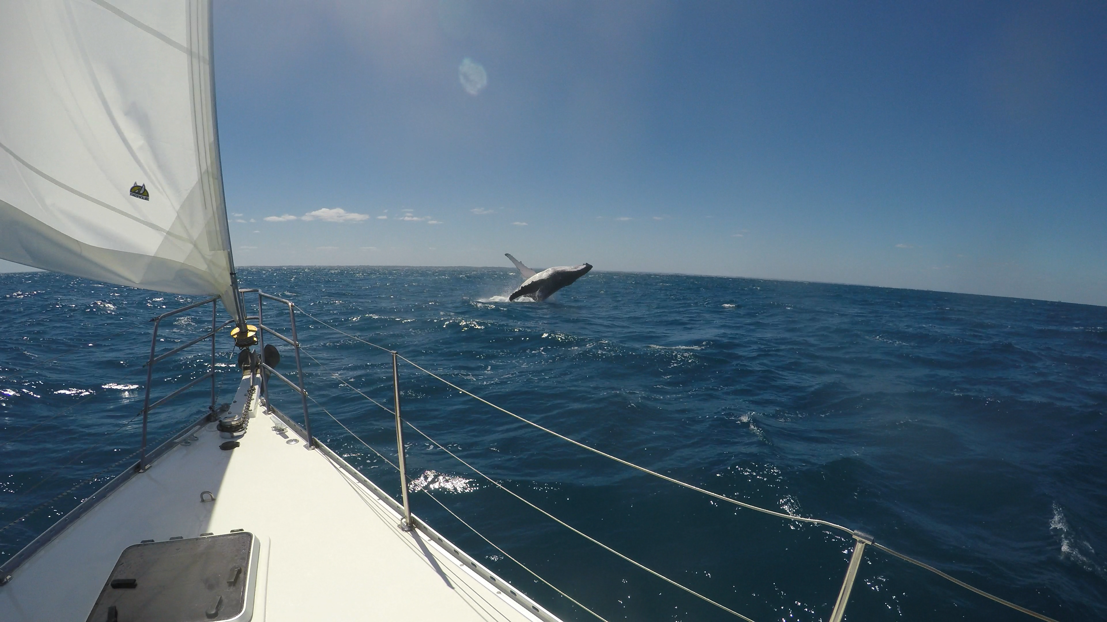 sailing_charters_perth_whale_watching