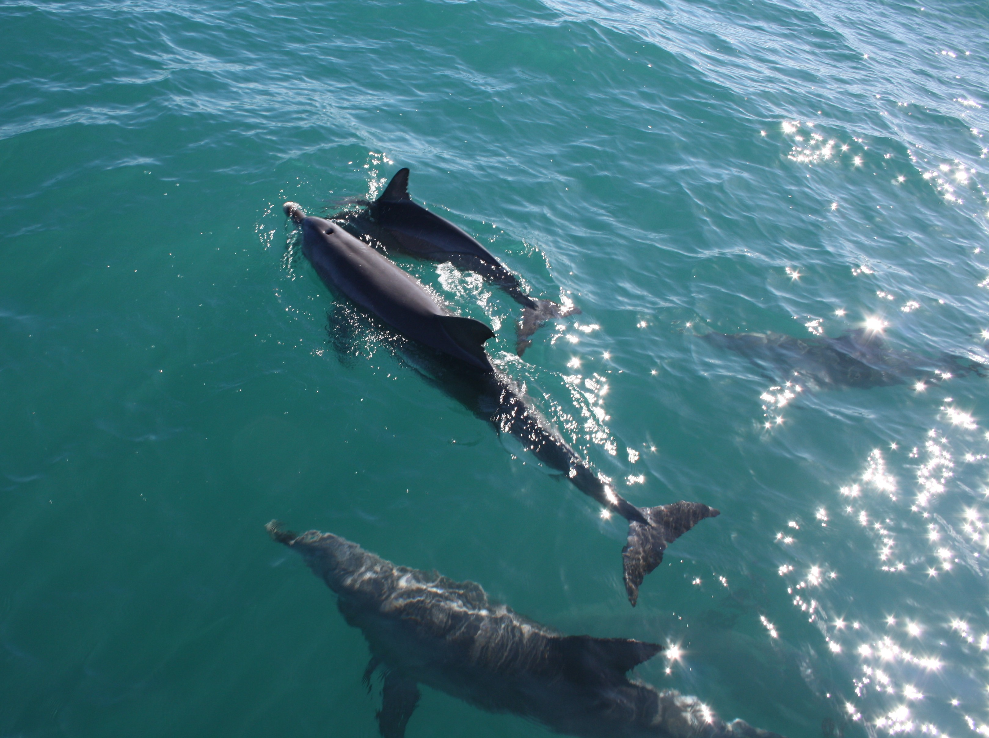 Mum and baby dolphin